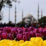 مهرجان أزهار التوليب في اسطنبول