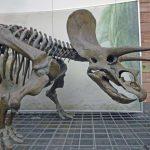الديناصورات - 471322
