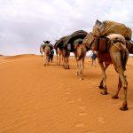 تعرف على أدب الرحلات عند العرب والمسلمين