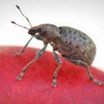 أسباب ظهور حشرة البق في المنزل