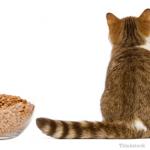 أسباب و علاج فقدان الشهية عند القطط