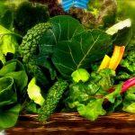 أكثر الأطعمة الصحية على وجه الأرض