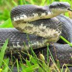 طرق مكافحة الثعابين في المنازل