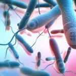 تاريخ وباء الكوليرا في العالم
