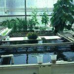 طريقة زراعة النباتات والأسماك على الأسطح بالتفصيل