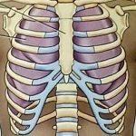 طرق الحفاظ على القفص الصدري