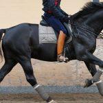 أغلى 8 خيول في العالم