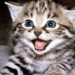 لغة وايماءات القطط من صوتها وحركات جسدها