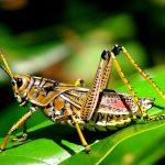 أخطر حشرات العالم