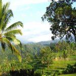 السياحة في قرية  تليمونغ في اقليم جاوة الشرقية