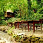 جانب من حديقة الطيور والنباتات في سبانجا - 493061