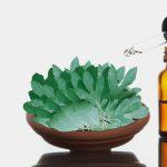 """الفوائد الصحية لزيت ساسافراس """"Sassafras Oil"""""""