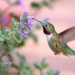 أصغر أنواع الطيور في العالم