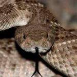 طرق التخلص من الثعابين في البيت