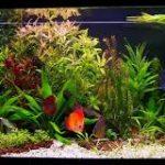 طريقة تنظيف حوض السمك وتغيير الماء