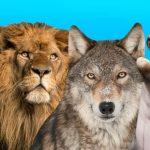 حيوانات انقرضت من الجزيرة العربية