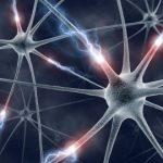 شرح درس وظائف الخلايا