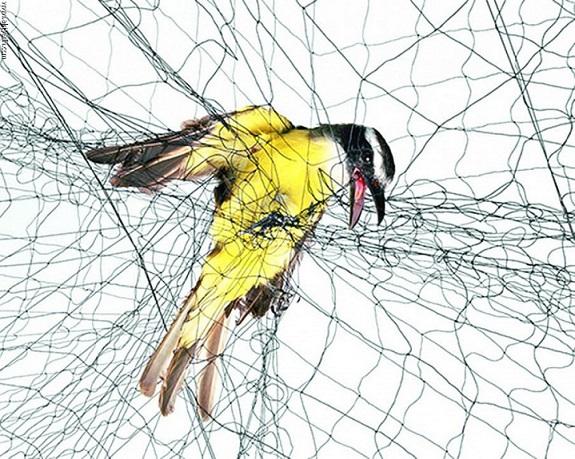 Oprasiti Prestrasen Pijesak شبكة صيد العصافير Tedxdharavi Com