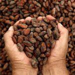 اكبر دولة في انتاج الكاكاو
