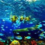 المدن الترفيهية المائية في سنتوسا