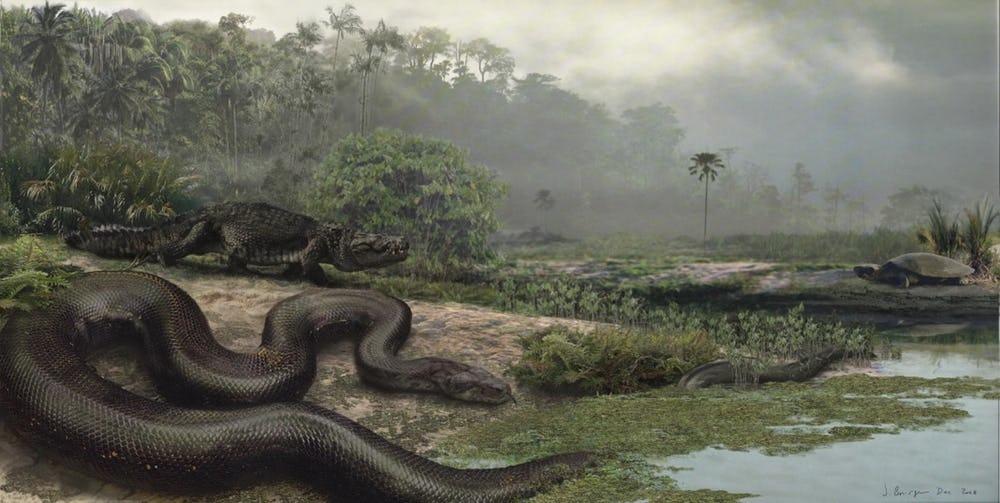 تيتانوبوا- Titanoboa Cerrejonensis