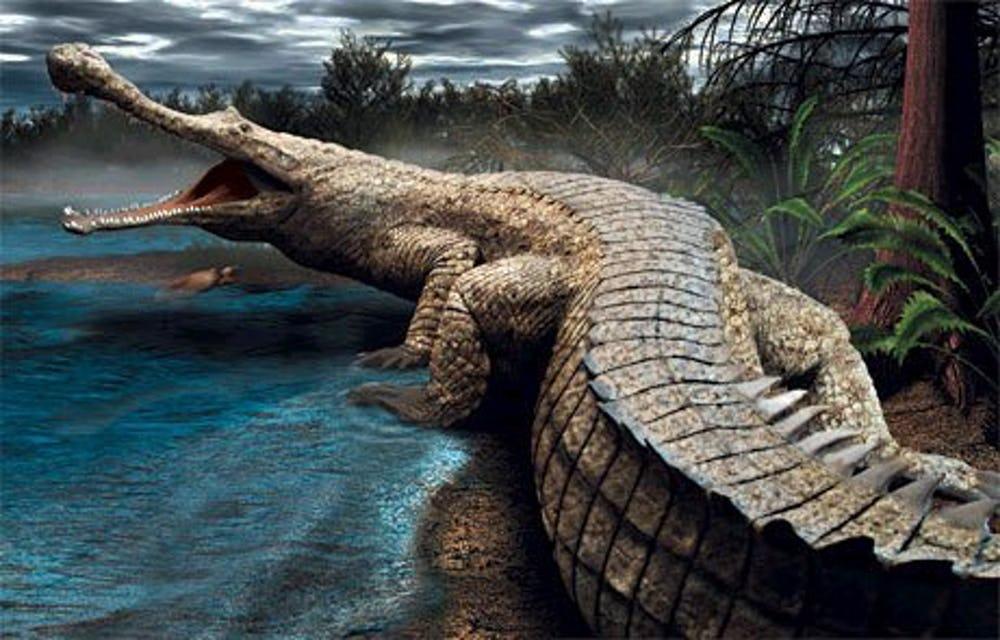 ساركوسوكاس- Sarcosuchus