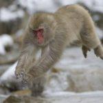 Photo of جميع انواع القرود بالصور