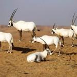 أجمل المحميات الطبيعية في الكويت