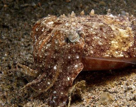 حيوان مائي يشبه الإخطبوط
