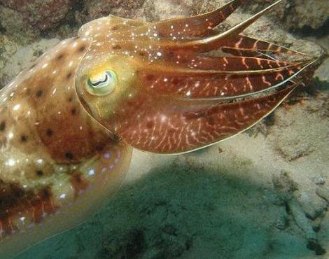الحيوان المائي الذي يشبه الإخطبوط