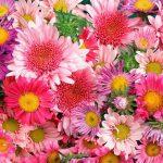 احترس من هذه الزهور