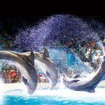 """شاهد اجمل 10 صور لـ عروض الدلافين في """" دبي دولفيناريوم """""""