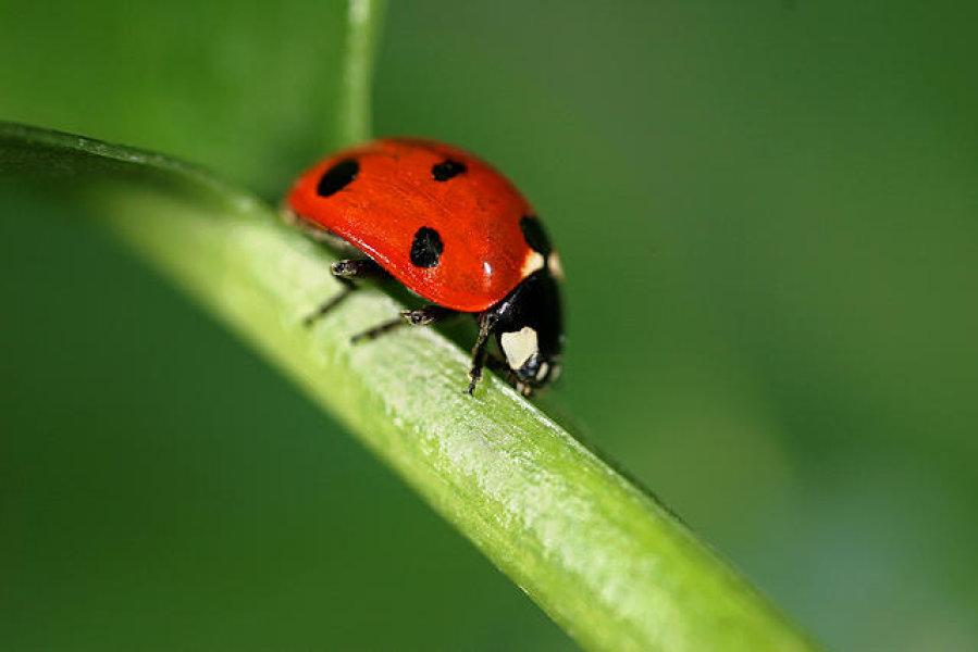 نصائح للتخلص من الحشرات