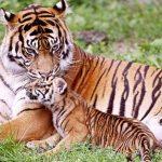 شاهد مراحل نمو الحيوانات بالصور