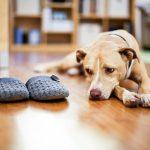 احتياطات تربية الكلاب في المنزل