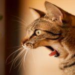 """حقيقة علمية """" لماذا تخاف القطط من الخيار """""""