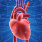الفيتامينات الضرورية لصحة القلب