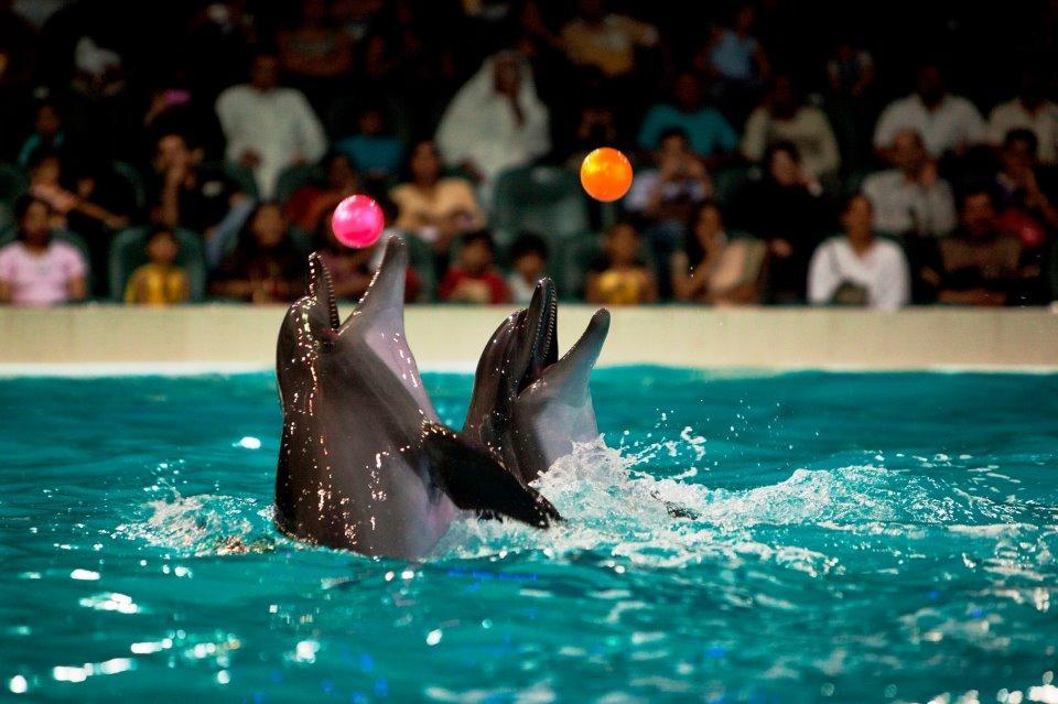 شاهد اجمل 10 صور لـ عروض الدلافين في دبي دولفيناريوم المرسال