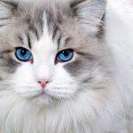 ماهي مدة حمل القطط وكم تلد