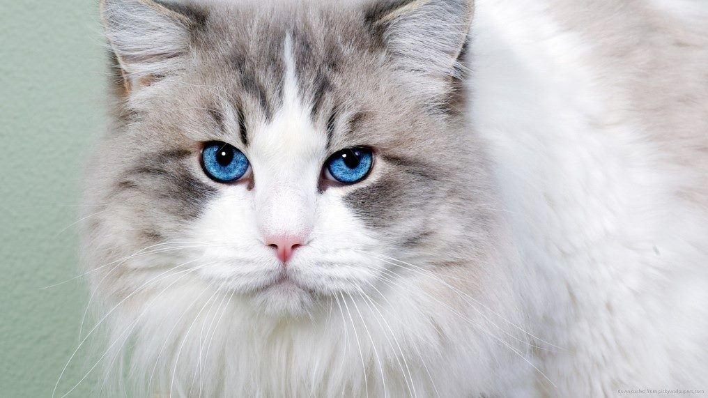 ماهي مدة حمل القطط وكم تلد مقالات