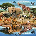 مهارات خاصة للحيوان لا يقدر عليها الانسان