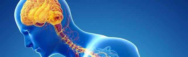 نتيجة بحث الصور عن الجهاز العصبى