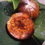 فاكهة البوروجو و فوائدها في علاج الأمراض