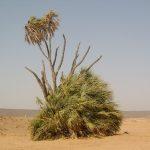 التربة الرملية و كيفية تخصيبها للزراعة