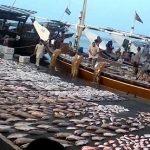 تقرير عن الثروة السمكية في الامارات