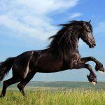 السر وراء قتل الخيول عندما تكسر ساقها