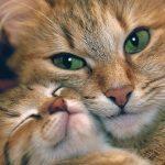 كيفية علاج القطط من الديدان