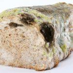 عفن الخبز أنواعه و فوائده و أضراره