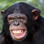 بالصور أذكى 8 حيوانات في العالم