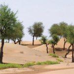 جهود سلطنة عمان لمكافحة التصحر